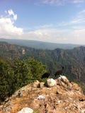 Giovani coppie dei falchi della montagna Immagini Stock Libere da Diritti