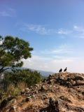 Giovani coppie dei falchi 2 della montagna Fotografie Stock