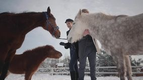 Giovani coppie del ritratto che segnano i cavalli su un ranch del paese nella stagione invernale Un uomo e una donna che camminan stock footage