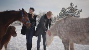 Giovani coppie del ritratto che segnano i cavalli su un ranch del paese nella stagione invernale Un uomo e una donna che camminan archivi video