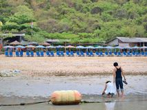 Giovani coppie e molte sedie di spiaggia sulla spiaggia Immagine Stock
