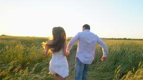 Giovani coppie felici che si tengono per mano e che passano il giacimento di grano al tramonto di estate, divertendosi aria apert video d archivio