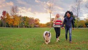 Giovani coppie spensierate che camminano con un cane nel parco colpo dello steadicam stock footage