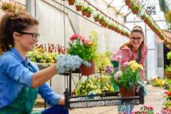 Giovani donne che lavorano nel bello giardino floreale variopinto Immagine Stock