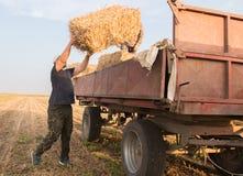 Giovani e forti balle di fieno del tiro dell'agricoltore in un rimorchio di trattore - b Fotografie Stock Libere da Diritti
