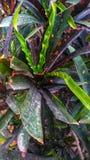 Giovani foglie immagine stock