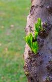 Giovani foglie Fotografie Stock Libere da Diritti