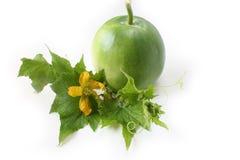Giovani foglie del melone di inverno Fotografia Stock Libera da Diritti