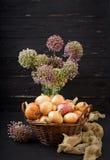 Giovani lampadine della cipolla e fiori freschi della cipolla Immagini Stock