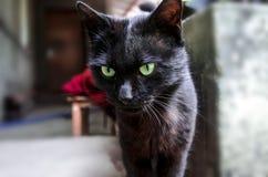 Giovani occhidel expressivedel greendel withdel gattodel blackFotografie Stock