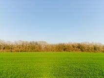 Giovani orecchie di grano sui precedenti di cielo blu fotografie stock