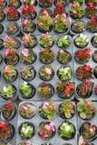 Giovani piante conservate in vaso Immagini Stock Libere da Diritti