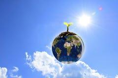 Giovani piantine piantate sulla terra del globo con chiaro cielo blu Immagine Stock
