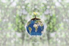 Giovani piantine piantate sulla terra del globo con il backgroun del bokeh Fotografia Stock