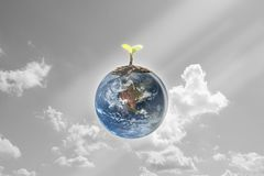 Giovani piantine piantate sulla terra del globo con il cielo e la nuvola b Immagini Stock Libere da Diritti