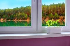 Giovani querce sul davanzale della finestra della finestra che trascura il lago della foresta Fotografia Stock