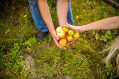 Giovani raccolti delle coppie delle mele Immagini Stock