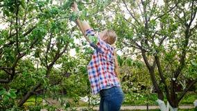 Giovani rami di albero femminili di taglio del gardenener con le taglierine del giardino al frutteto immagine stock libera da diritti