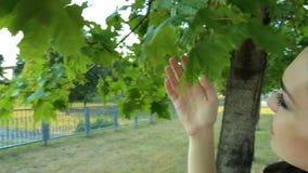 Giovani supporti castana svegli vicino ad un albero ed ai tocchi le foglie verdi della palla stock footage