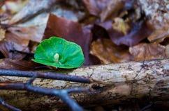 Giovani tiri delle piante della molla Fotografia Stock Libera da Diritti