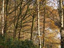 Giovani tronchi e fogliame di albero in autunno immagine stock libera da diritti
