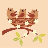 Giovani uccelli Immagine Stock