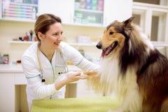 Giovani veterinario e cane sorridenti all'ambulanza dell'animale domestico fotografia stock