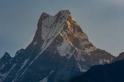 Gipfel des Machapuchare-Fisch-Endstücks, das bis zum goldener Stunde des ersten Sonnenscheins, Himalaja geschlagen wird stockbild