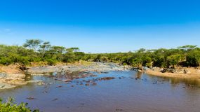 Gippo basen w Serengeti, Tanzania Fotografia Royalty Free