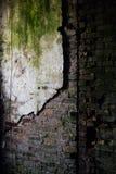 Gips-Wand und Ziegelstein mit Moos - Einsturzhaus Stockfoto