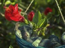 Gipskatt som sover i hängmatta Arkivbilder