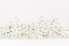 Gipsophilla auf einem weißen Hintergrund Stockfotos