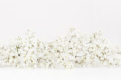 Gipsophilla su un fondo bianco Fotografie Stock