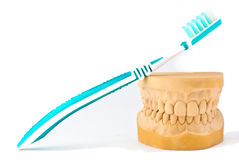 gipsu modela tynku ząb Obrazy Stock