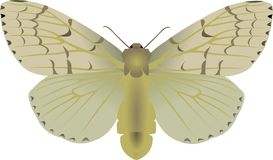 Gipsy moth Royalty Free Stock Images