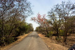 Gir forest Stock Photography