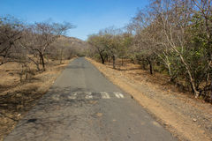Gir forest Stock Image