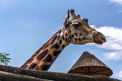 Giraf bij de Dierentuin van Boedapest stock afbeelding