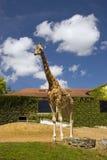 Giraf bij een dierentuin stock afbeelding