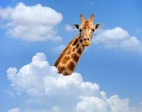 Giraf boven wolken royalty-vrije stock afbeeldingen