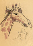 Giraf, die 2 trekt Stock Afbeeldingen