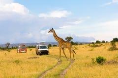 Giraf die de weg kruist royalty-vrije stock afbeelding