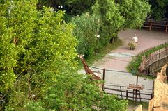 Giraf die in Safari Park eten Stock Fotografie