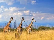 Giraf met de stad van op de achtergrond royalty-vrije stock foto