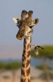 Giraf met vogel kenia tanzania 5 maart 2009 Stock Foto's