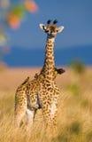 Giraf met vogel kenia tanzania 5 maart 2009 Royalty-vrije Stock Foto's