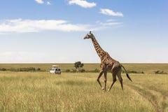 Giraf in Nairobi Kenia stock afbeelding