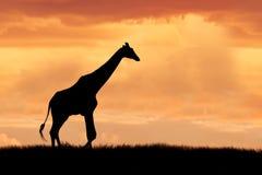 Giraf op Afrikaanse vlaktes stock fotografie