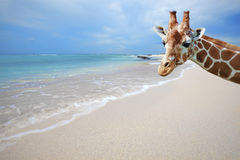 Giraf op vakantie royalty-vrije stock fotografie