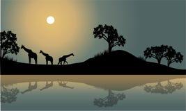 Giraf in riverbanklandschap Stock Afbeelding